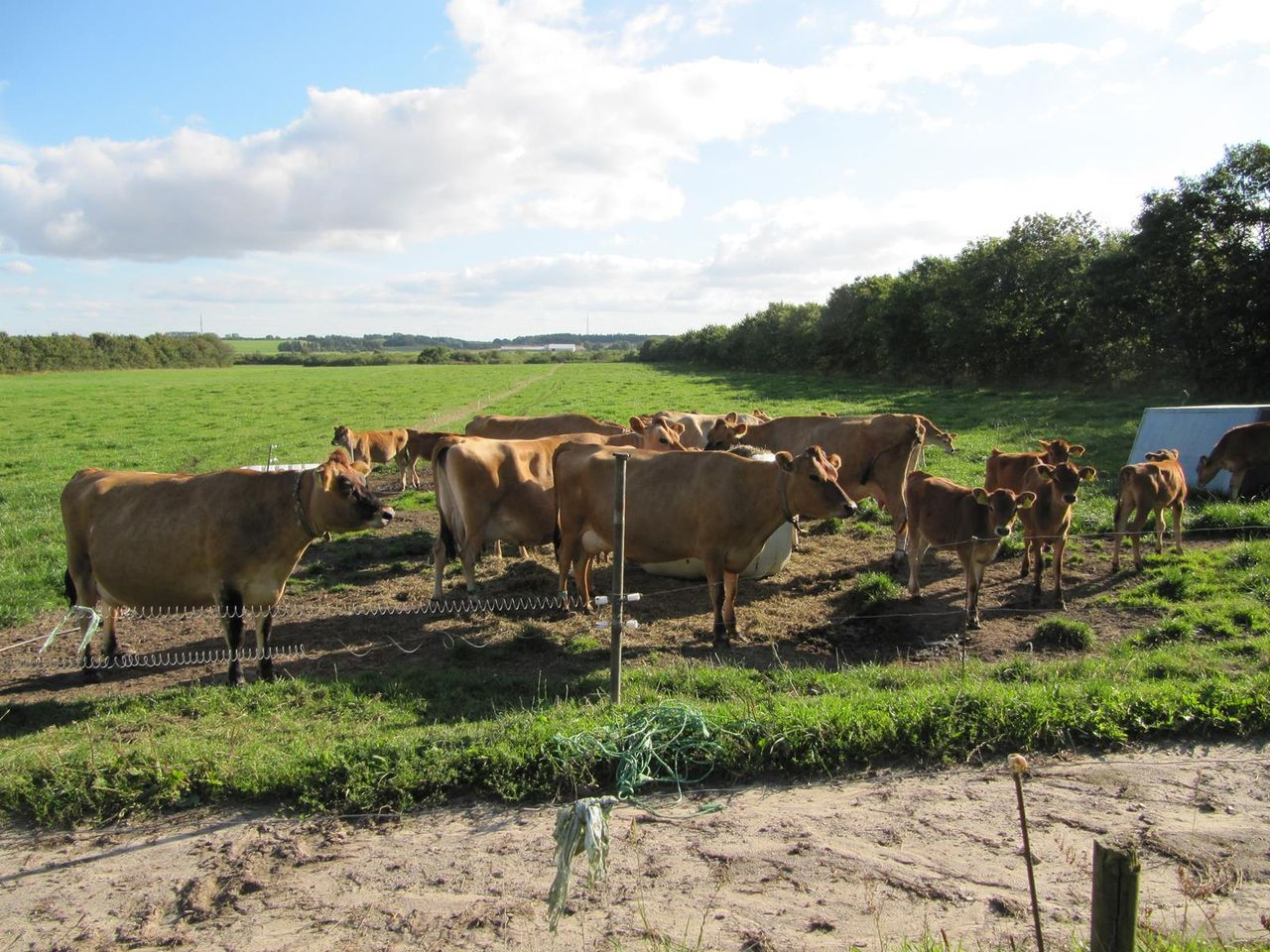 farming in denmark Denmark also has a longstanding tradition of animal husbandry as a result,  some fur farmers have additional types of agriculture, including other animals  and.